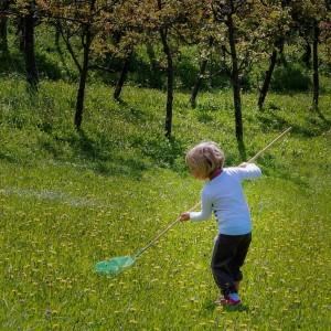 Otroške radosti-Spoznavanje metuljev, Silvo Polovič