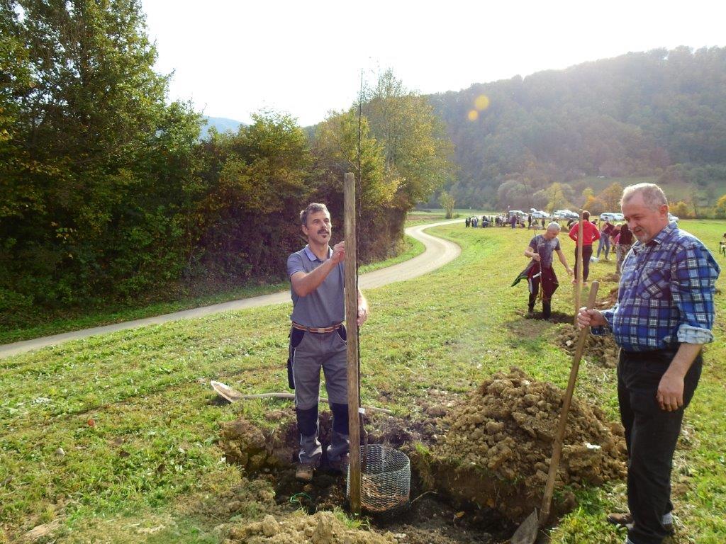 Zasaditev-drevored-20.10-17