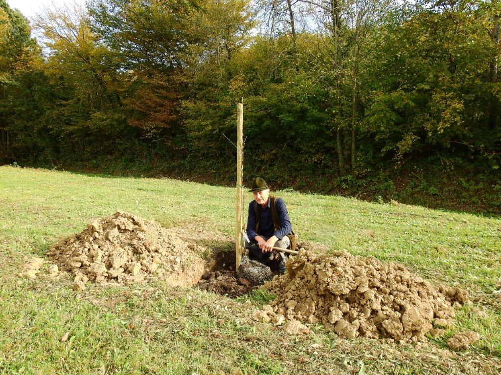 Zasaditev-drevored-20.10-18